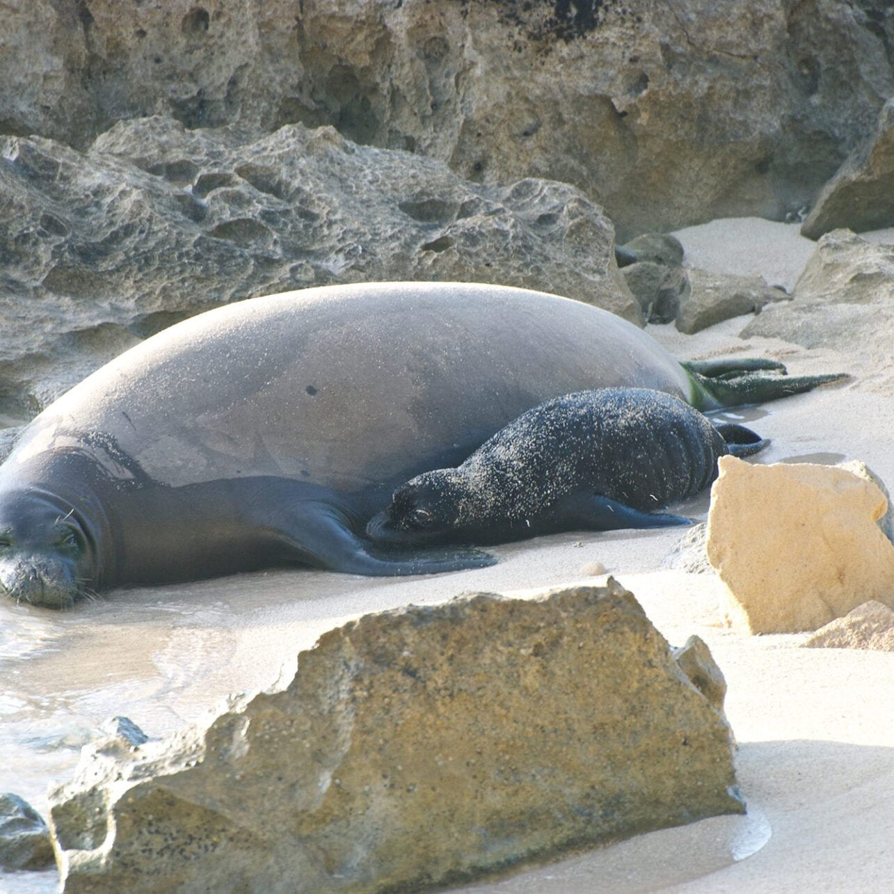 Monk Seal_2000